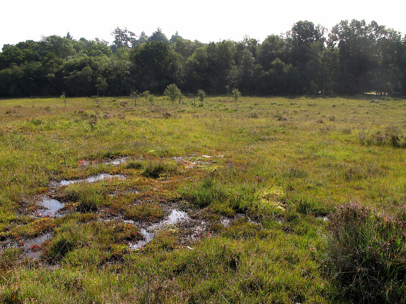 Even after weeks of hot dry weather, Linwood Bog is still very wet.