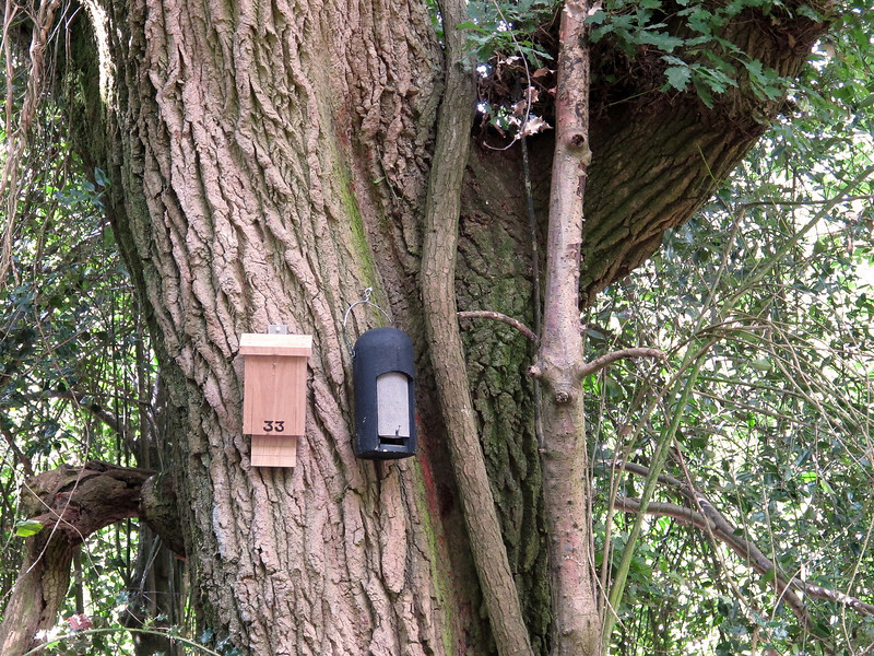 Nesting box in Holt Wood numbered for the convenience of the local postman.