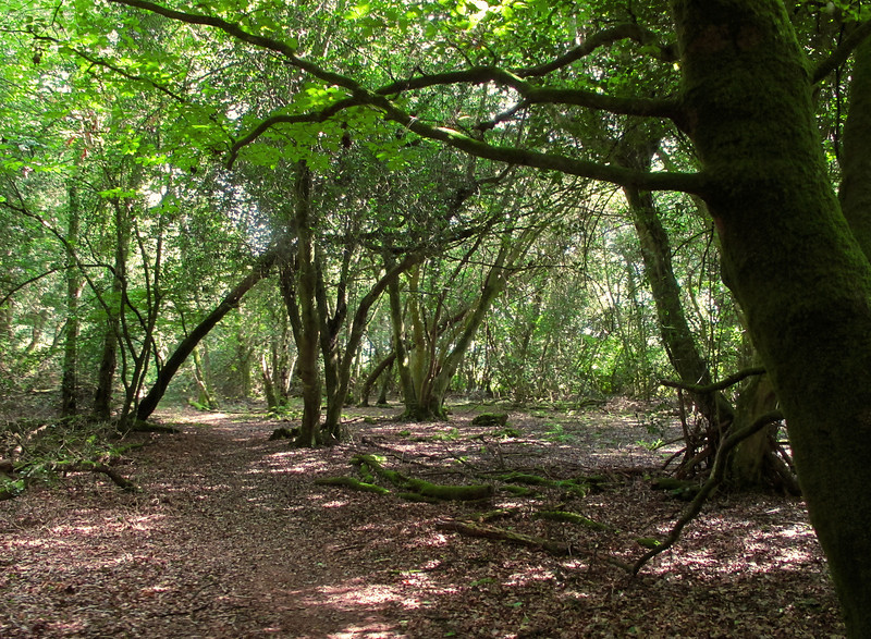 Footpath passing through Holt Wood.