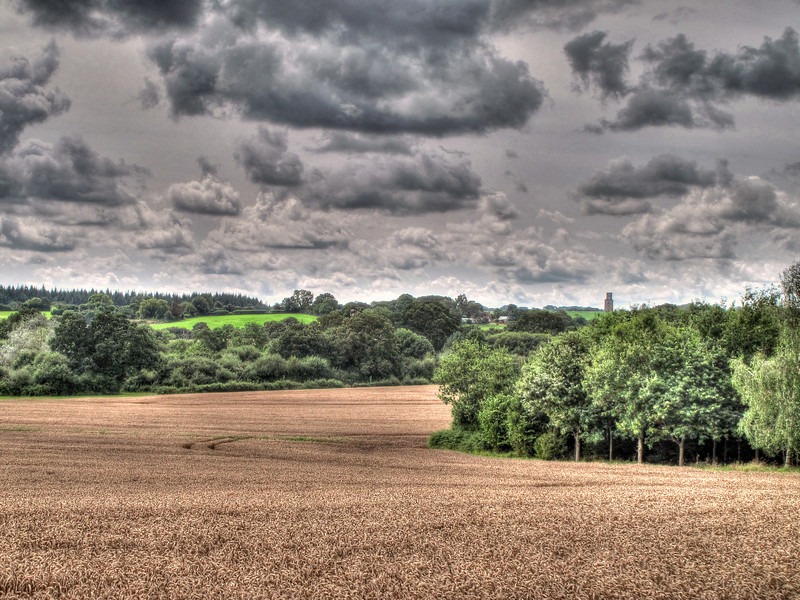 Looking across wheat fields from the edge of Remedy Oak Golf Course with Horton Tower in the distance.