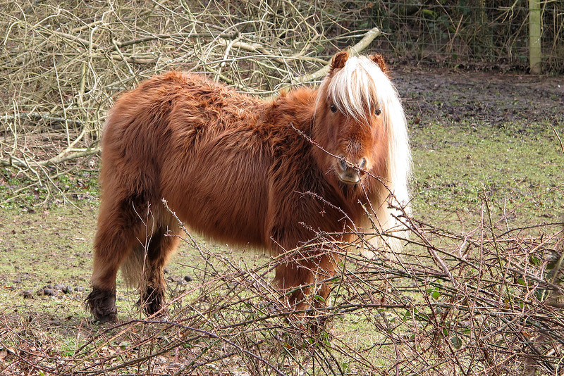 A cute little pony watches me closely