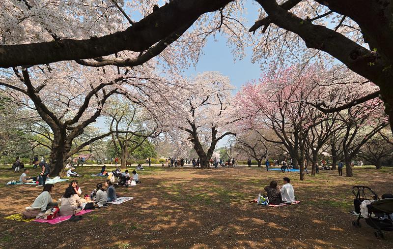 Tokyo Shinjuku Gyoen National Gardens