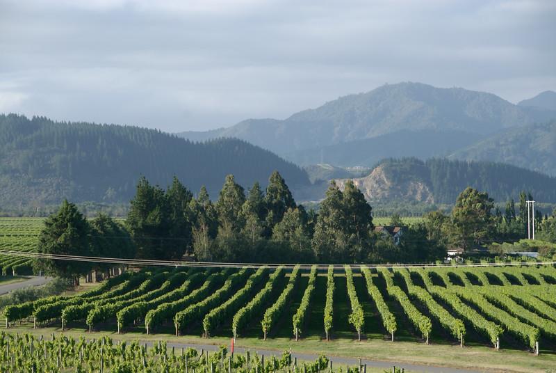 Marlborough Wine Area