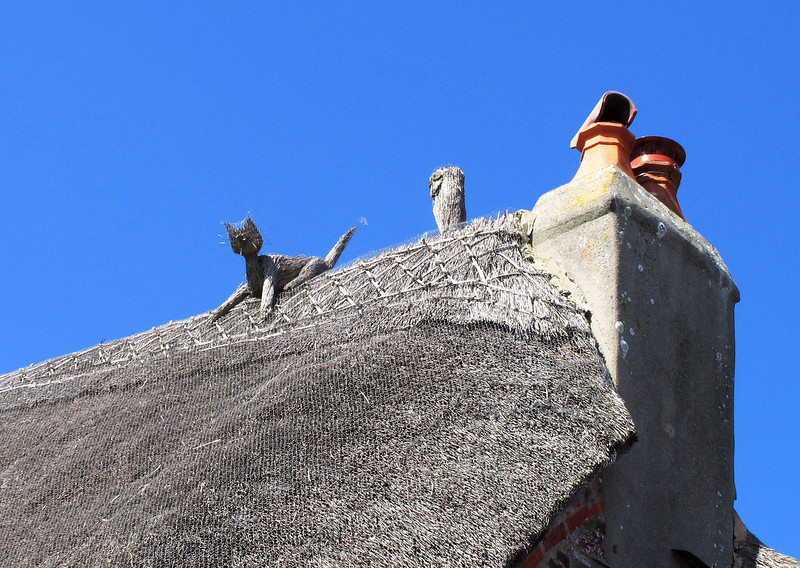 Straw cat on a hot thatched roof.