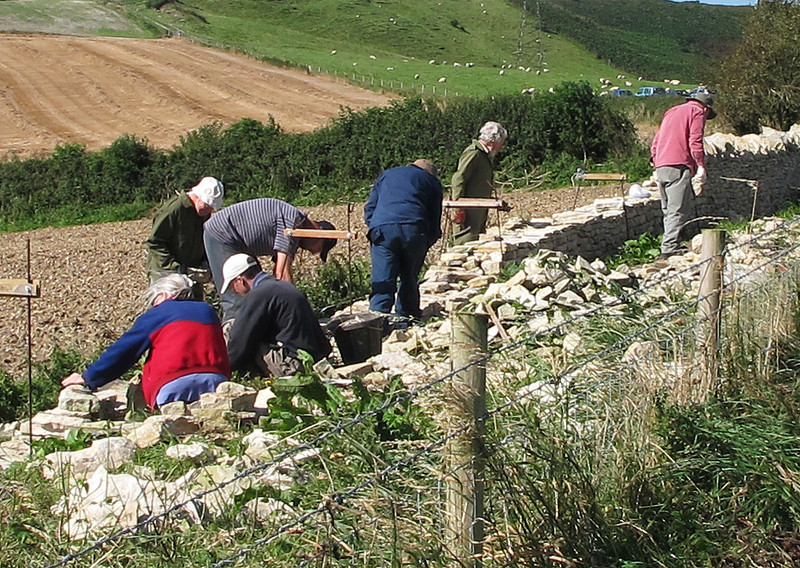 A volunteer group rebuilding a derelict dry stone wall.
