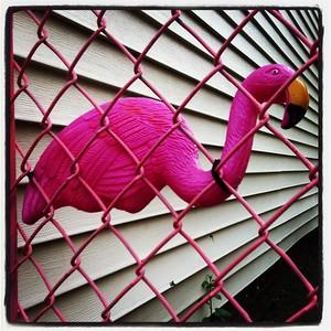 Flamingo Fence, Boston