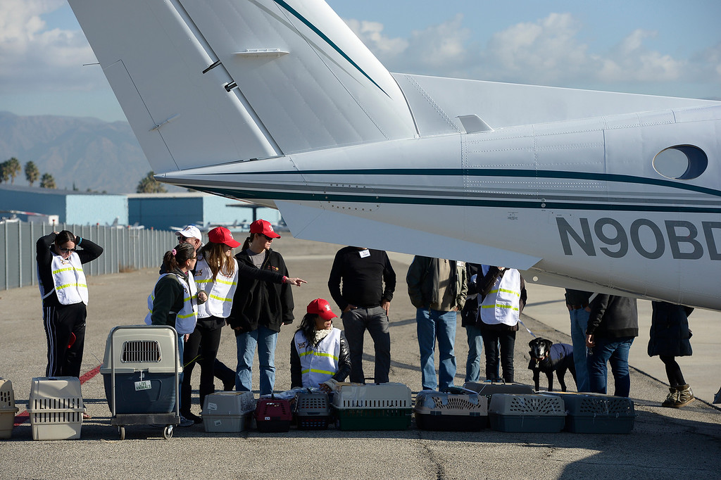 . Volunteers at Van Nuys airport loaded over 400 animals onto 14 private planes so that they could go to new homes all over the Pacific Northwest. The non-profit organization Wings of Rescue is in its 3rd year of finding homes for dogs and cats that would otherwise be put down. Van Nuys, CA. 12/5/2013, photo by (John McCoy/Los Angeles Daily News)