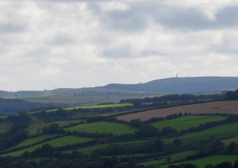 Last week's walk can be seen in the distance - Hardy's Monument stands tall on the hill to the South.