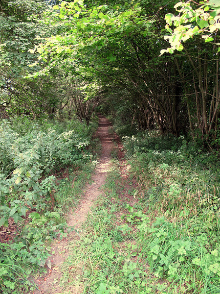 A welcoming woodland path
