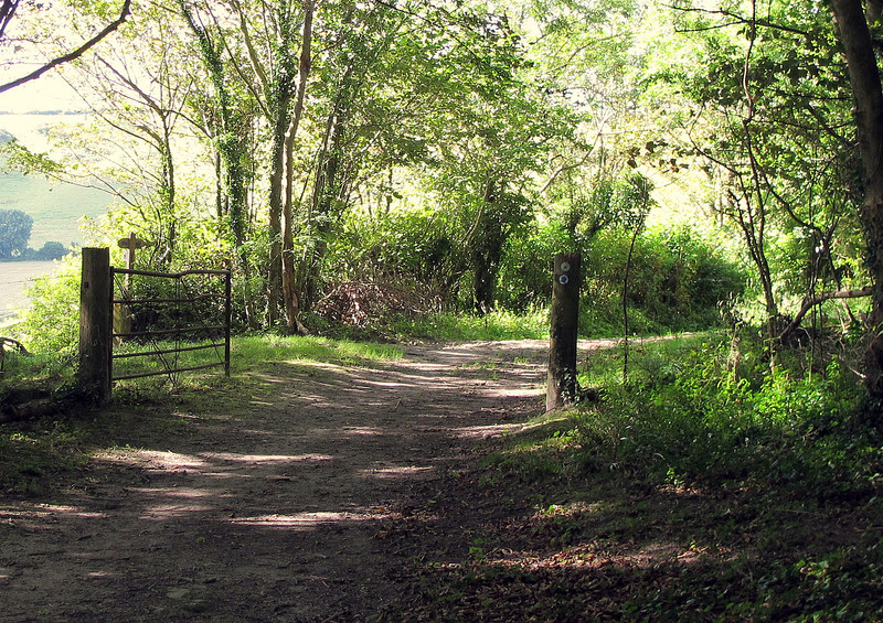 Part of the Wessex Ridgeway