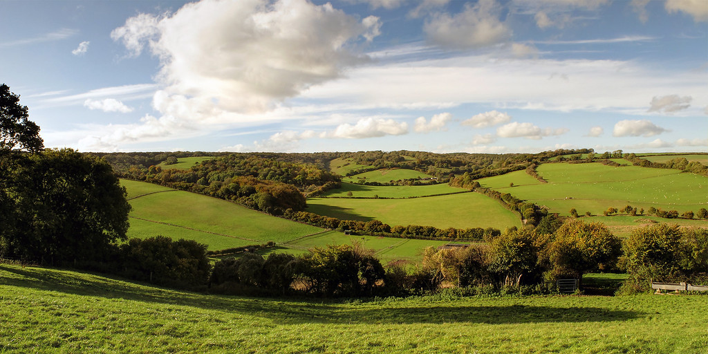 Countryside at Winterborne Houghton