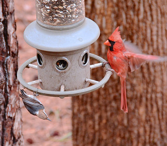 13 Atlanta Easter Birds and Squirrels