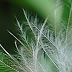 Zuiko_feathertest_ 23 top