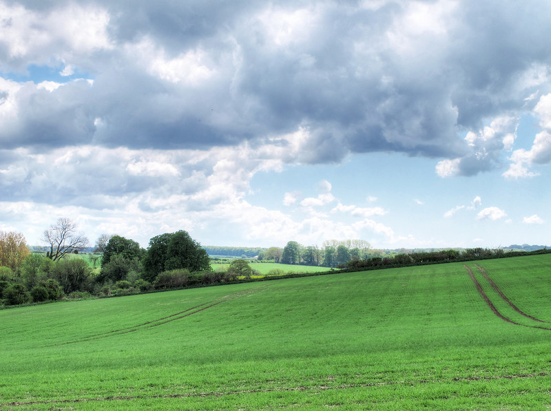 The view over new wheat at Harley Down.