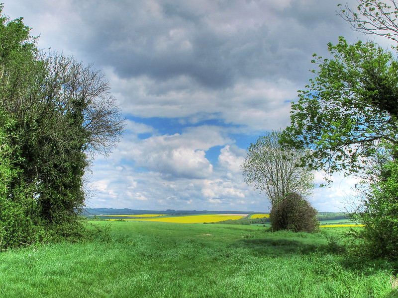 The view from Harley Down towards Wyke Down.