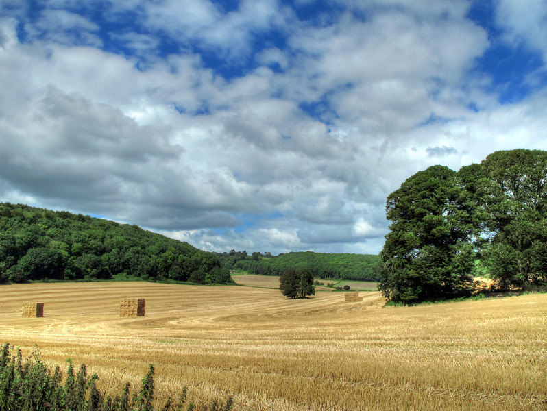 The view over fields from the Milton Abbey School