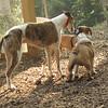 Chase, Ruby, Buddy