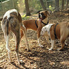 Chase, Ruby, Buddy 2