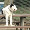 MARLEY (boy pup)1 sits