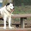 MARLEY (boy pup)2 sit