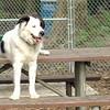 MARLEY (boy pup)sitter
