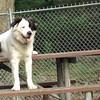 MARLEY (boy pup)0 sitting