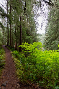 Early on along the Sol Duc River trail