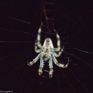 Spider-003