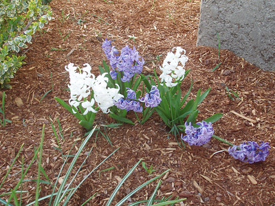 17 Glenwood - Spring 06
