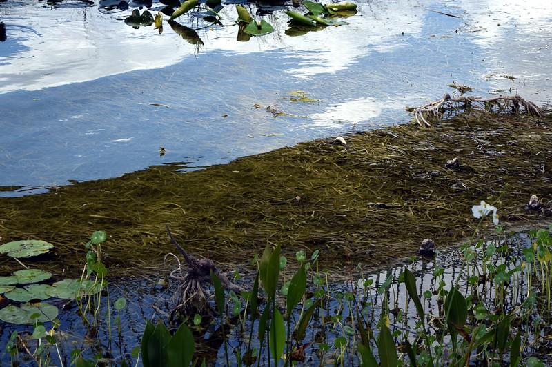 063a Lake Eustis 5-1-17