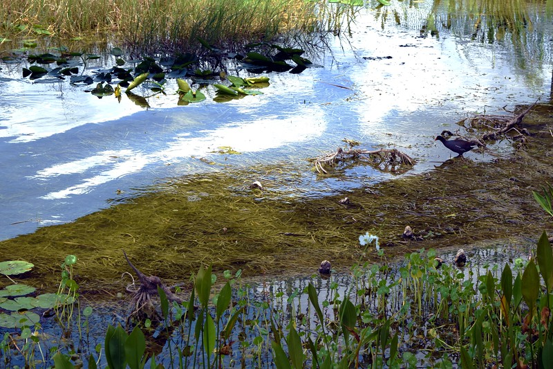062a Lake Eustis 5-1-17