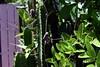 009a Backyard Cactus 4-20-17