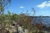 094a Halifax River 10-12-17