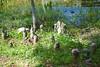 058a Lake Eustis 5-1-17