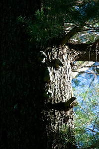 This tree face was there when we moved in.
