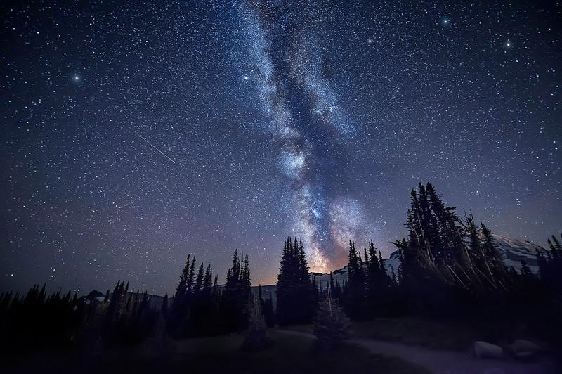 Massive Trees & The Milky Way Galaxy