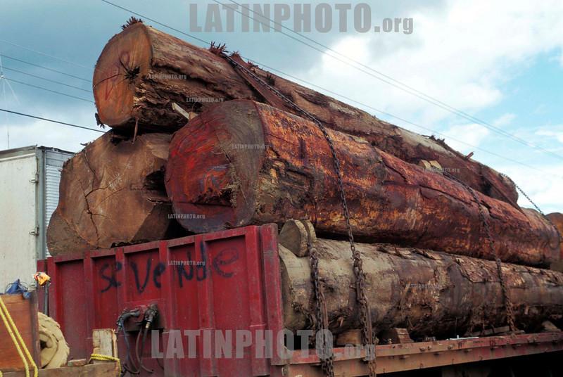 Costa Rica : Llevar los registros de selva a SAN JOSE . / CARRYING LOGS FROM RAINFOREST TO SAN JOSE. / Abholzung. Ein Lastwagen transportiert Baumstämme. © Julio Etchart/LATINPHOTO.org