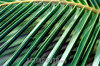Costa Rica-Tortuguero . Plantas y flora. / Costa Rica : Plants and Flora. / Costa Rica-Tortuguero: Pflanzen und Flora. Regenwald. Blatt. /<br /> © German Falke/LATINPHOTO.org