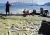 Mexico : Pescadores de la costa trabajando en grupo con redes de arrastre en Acapulco Guerrero el 11 de Noviembre de 2001 . / Group of fishermen works on the strand near Acapulco Guerrero./ Mexiko: Eine Gruppe Fischer fischen mit Netzen an der Küste von Acapulco Guerrero./  (FILM) <br /> © Mario Vazquez/MVT/LATINPHOTO.org