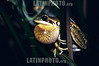 Ranita del Zarzal (Hylla pulchella), macho cantando para atraer a la hembra. Sierra de la Ventana, Parque Provincial Ernesto Torquinst, Buenos Aires, Argentina.<br />  / Argentine :  . / Argentinien: . ©  Nilce Silvina Enrietti/LATINPHOTO.org
