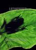 Argentina :  Rana Mono (Phyllomedusa sauvagei), cria pequena, origen Santiago del Estero. anfibio. contraluz. hoja de arbol. / Argentine: frog. / Argentinien: Frosch sitzt auf einem Baumblatt. Gegenlicht.  Amphibie. Natur. ©  Nilce Silvina Enrietti/LATINPHOTO.org