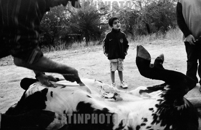 Argentinien :  Carneando un toro. / Butchering a bull. Vinal Pozo, Santiago del Estero. June 2009. / A child looks at a slaughter of a bull. / Argentinien: Ein Kind schaut in Vinal Pozo einer Schlachtung eines Stiers zu. (B/W) ©  Andres Lofiego/LATINPHOTO.org