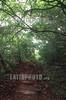 Costa Rica :  Sendero Cerro Barra Honda, septiembre del 2002, Parque Nacional Barra Honda, Nicoya, Guanacaste. /Cerro (Hill) Barra Honda trail. / Barra Honda National Park, Nicoya, Guanacaste. / Regenwald im Nationalpark Barra Honda. ©  Andrea Diaz-Perezache/LATINPHOTO.org