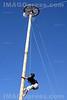 Ein Junge klettert am Marché Bio in Saignelégier einen Baumstamm hoch. Preis.