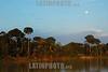 Brazil: Floresta amazonica . / Brazil: Amazonian rain forest. / Brasilien : Urwald. Amazonas.<br /> ©  Angelo Lucas/LATINPHOTO.org