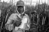 Republica Dominicana - Barahona 15/09/03 : En varias zonas de Republica Dominicana existen plantaciones de cana azucarera . En estos sitios trabajan principalmente Hiatianos  ,en condiciones de explotacion y llevando una vida miserable. En la imagen un capataz dominicano controla la cantidad de cana cortada. / Dominican Republic : black worker on a sugar plantation. / Dominikanische Republik : Schwarzer Arbeiter auf einer Zuckerplantage. Arbeit. Job. (B/W)<br /> ©  Orlando Barria/LATINPHOTO.org