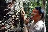 Brasil: Indios deni . Amazonas. / Brazil: Deni indians. Deni tribe indians. indigenous. ethnic minority. autochthons. / Brasilien : Deni - Indianer. Urbewohner. Ethnische Minderheit im Amazonas - Gebiet. Baum. Ein Indio probiert den saft eines Baumes.<br /> ©  Angelo Lucas/LATINPHOT