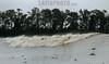 """Brasil : Una ola de la marea, conocido como pororoca, sube el rio Araguari, en el estado norteno de Amapa, Brasil. La pororoca de Araguari es posiblemente el mas peligroso de todos los ondas de marea de la amazonia, temido por los residentes locales para el estrago que causa. Las ondas llegan a la altura de en 2 a 3 metros y alcanza velocidades entre 30 a 50 kilometros por hora. Para cogerlo, las surfista deben saltar de una lancha quando la onda sube el rio. Puesto que la onda ocurre solamente dos veces por el dia, cuando la marea entrante del oceano invierte el flujo del rio, no hay muchas ocasiones de cogerlo. La palabra """"pororoca"""" viene de las palabras de dialecto de las indigenas amazonenses """"poroc porco"""" que significa  """"destructor"""" o """"gran rafaga"""" Desde el tiempo inmemorial, la gente ha temido el rugido que precede. / Brazil: A tidal bore wave, known as pororoca, goes up the Araguari River, in Brazil's northern state of Amapa. The Araguari pororoca is possibly the most dangerous of all the Amazonian tidal bores, long feared by locals for wreaking havoc on their communities. wave crests at 2 to 3 meters and races at speeds between 30 to 50 kilometers per hour.  To catch it, surfers must leap from a motorboat as the wave barrels upriver. Since the wave only occurs twice per day when the incoming ocean tide reverses the river flow for a time, there are not many chances to catch it,  The name """"pororoca"""" comes from an Amazonian indigenous dialect meaning """"destroyer"""" or """"great blast.""""  Since time immemorial, people have feared the roar which precedes the wall of water that capsizes boats and washes away anything in its path. / Brasilien: Surfer in der Region des Araguari - Flusses im Norden von Amapa.  Wellenreiter. Sport. Abenteuer. © Douglas Engle/LATINPHOTO.org"""