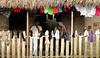 Nicaragua - Alamikamba: Ninos miskitos comen cana en su casa de tambo en Alamikamba , 400 kilometros al norte de la capital, en el atlantico norte . Alamikamba es la region mas pobre del pais donde solo el 39.4 % de la poblacion sabe leer y escribir, el 65.8 por ciento de los ninos y ninas asisten a la escuela primaria y el 17.6 por ciento asisten a la escuela secundaria. tribu. / Nicaragua: Miskitos indigenous. / Nikaragua: Indigene Bevölkerung der Miskitos. Familie in einer Holzhütte. Wäsche liegt zum Trocknene auf der Veranda. © Navarrete/LATINPHOTO.org