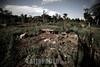 Paraguay: En Paraguay mas de 2 .600.000 hectareas de soja - el doble que en el 2001 - y en el ultimo ano se produjeron 3 ,8 millones de toneladas. Ademas de la expulsion de campesinos, los productos que se utilizan para fumigar son considerados toxicos de alta peligrosidad. El asentamiento 13 de Mayo, en el departamento de Itapua, es el escenario del intento de unas 40 familias por sobrevivir y mantener sus cultivos tradicionales en medio de ese oceano de soja. / It is the history of the settlement 13 de mayo, in the area of Itapua, Paraguay. It is a group of peasant families - about 70 people - who atempt to maintain their identity and their unique relationship with the land, within the framework of the advance of the soy monocultive. There are in Paraguay 2.600.000 hectares of soy - twice as much as in 2001- and in the last year 3.8 millons of tons have been produced, dispite the drought. /  C'est l'histoire de l'etablissement 13 de Mayo, dans la region de Itapua, Paraguay. C'est un group de familles paysannes - un total de 70 personnes - qui essayent de soutenir leur identite et leur liaison avec la terre, dans le cadre de l'avancee du monocultive du soja. Au Paraguay, il y a 2.600.000 hectares de plantation de soja - deux fois plus que dans l'annee 2001 - et dans l'annee derniere 3.8 millons de tonnes de soja ont ete produits malgre la secheresse. / Sojabauern in Encarnacion. Landwirtschaft. Sojaanbau. © Sebastian Hacher - Olmo Calvo Rodriguez/LATINPHOTO.org